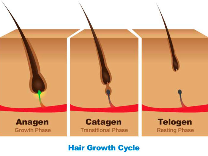 چرخه رشد طبیعی مو